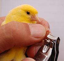 cortando uñas
