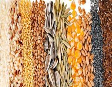 Tipos de semillas para canarios